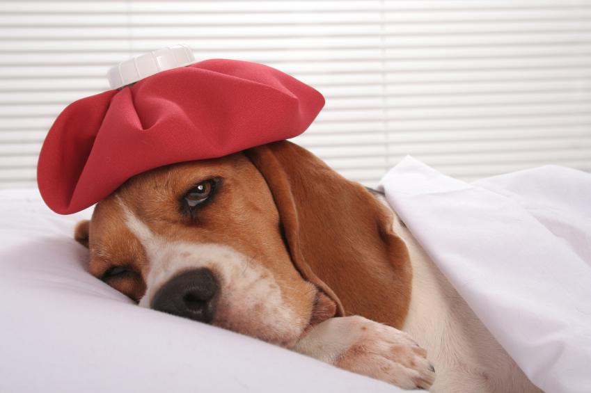 Dog medical insurance