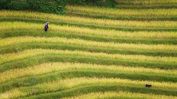 lim mong village, mu cang chai