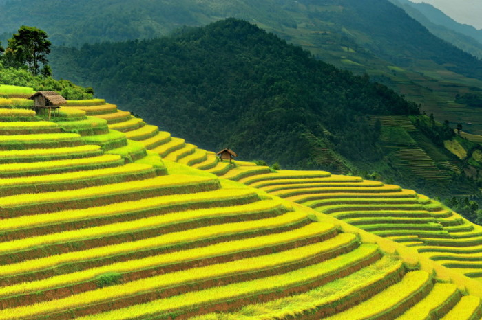 Mu Cang Chai terraced rice fields in Vietnam