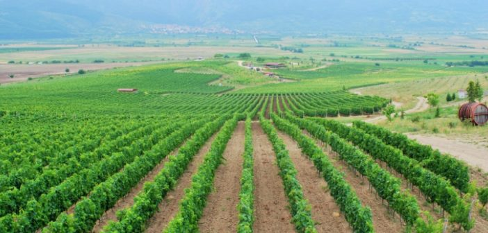 Bulgaria: An Emerging Wine Travel Destination